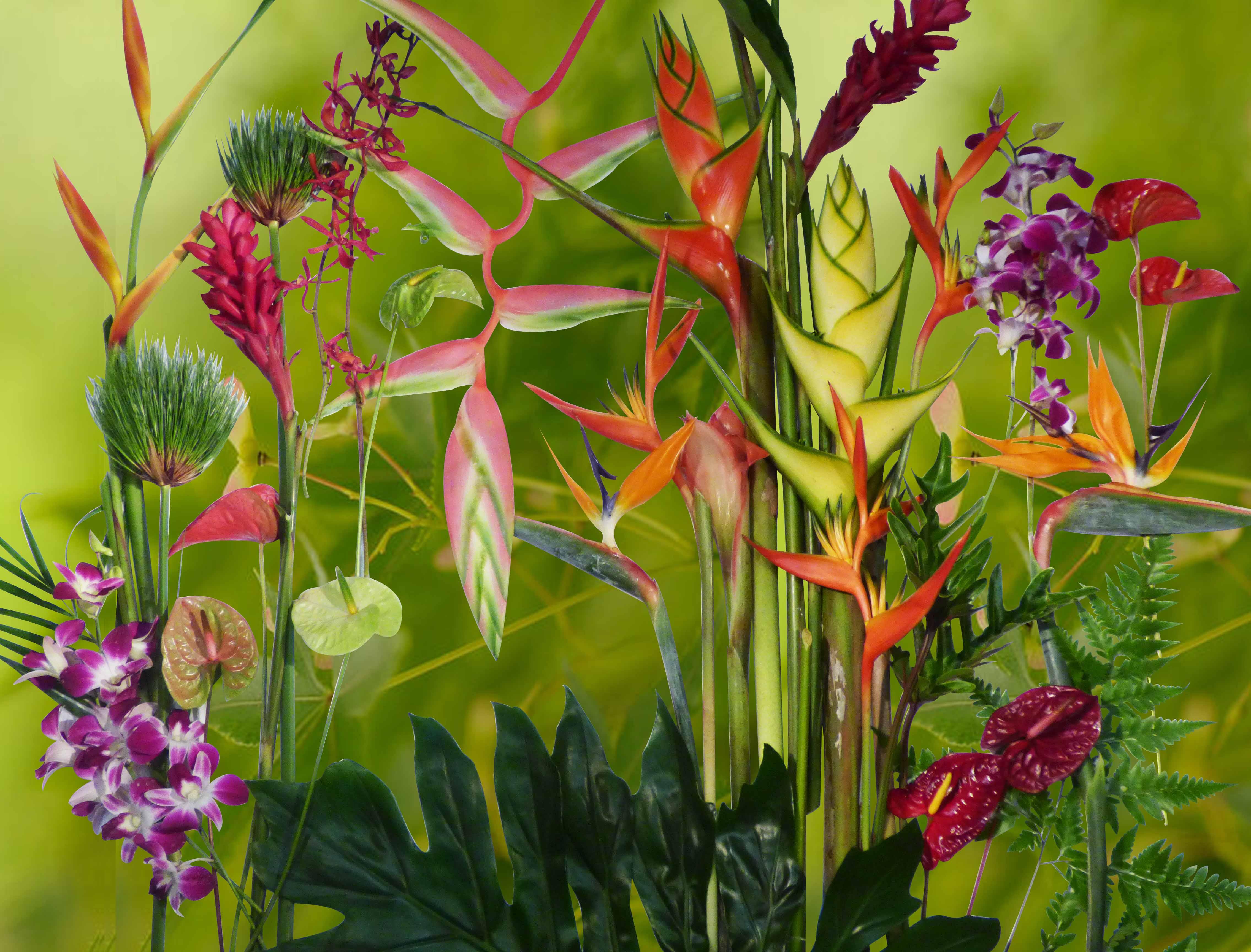 Bouquet de fleurs tahiti for Fleurs et fleurs